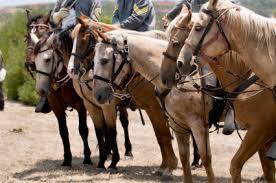 Horses in Civil War