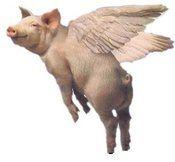 Hogg flying