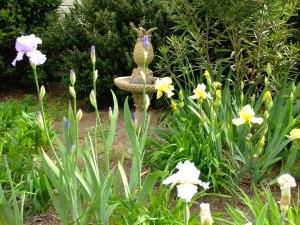 front garden with iris 2