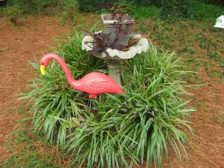 flamingo at birdbath