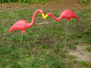 flamingos smooching in the yard!