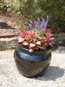 Matching pots flanked the entrance path. Coleus and salvia