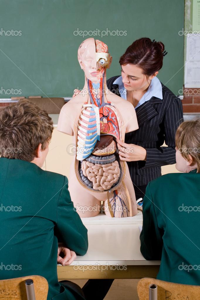 Учительница преподает урок анатомии 13 фотография