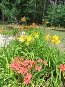 daylillies-onpatio-of-90-castlerock-dr-youngsville-nc-helen-and-max